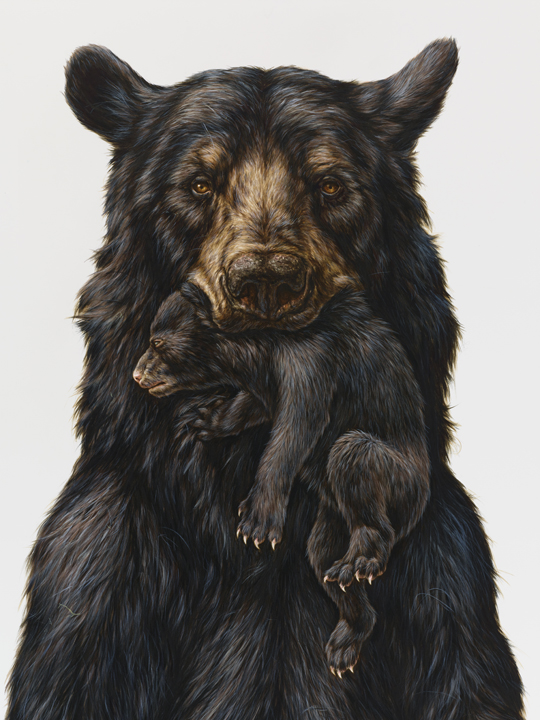 George Boorujy Bear Appalachian